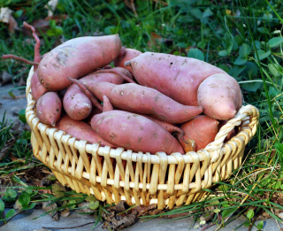 swwet potato basket 2